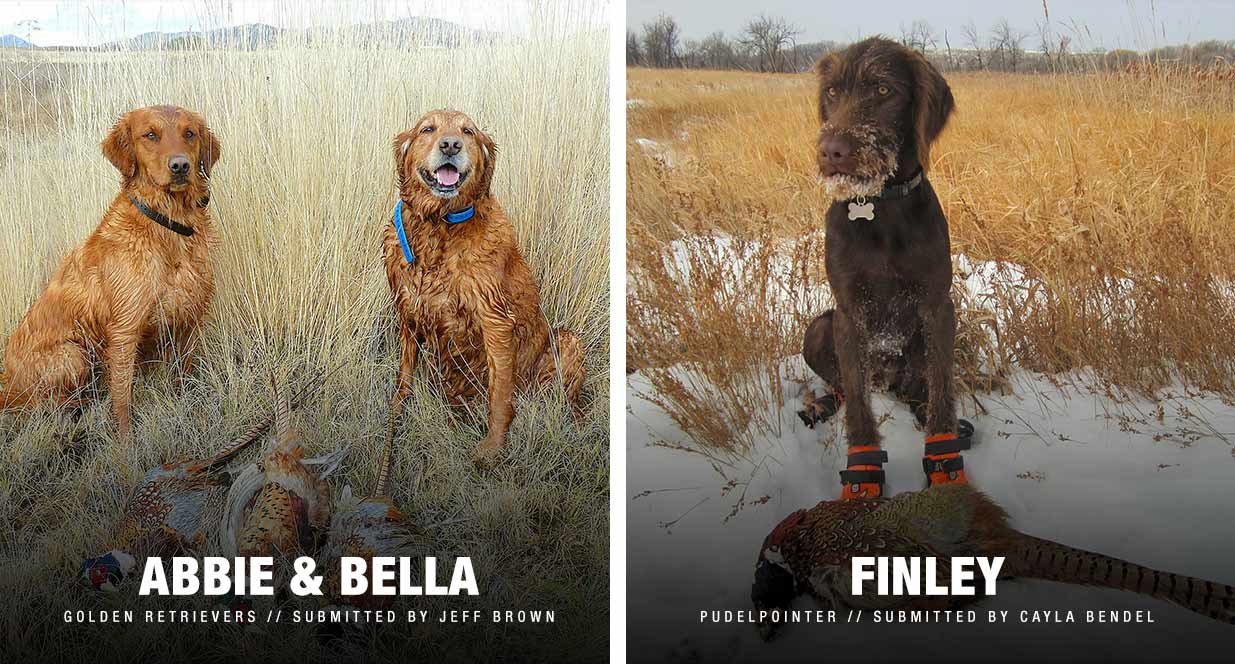 South Dakota Tourism hunting dogs