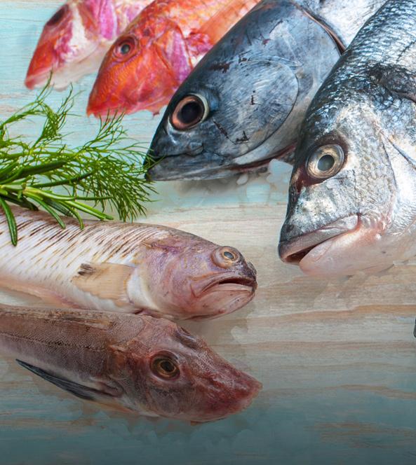 Fish   Dakota Seafood