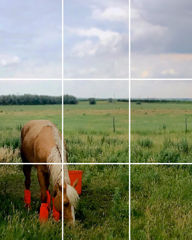 Horse Rule of Thirds | Up Your Smartphone Photo Game
