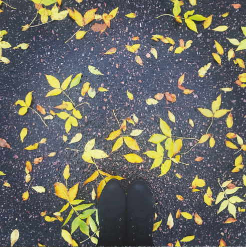 Leaves | Up Your Smartphone Photo Game